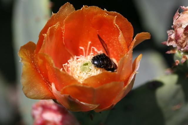 Bee Ass 15