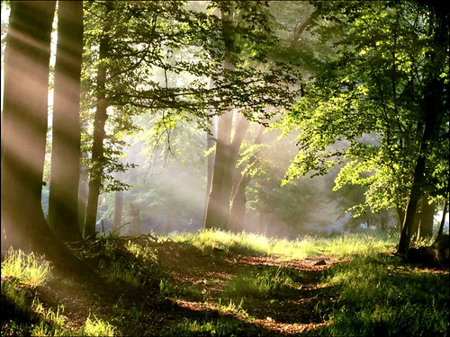 Forest Path with Sun Beams | by sabrina_8639
