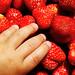 compulsive strawberry eater