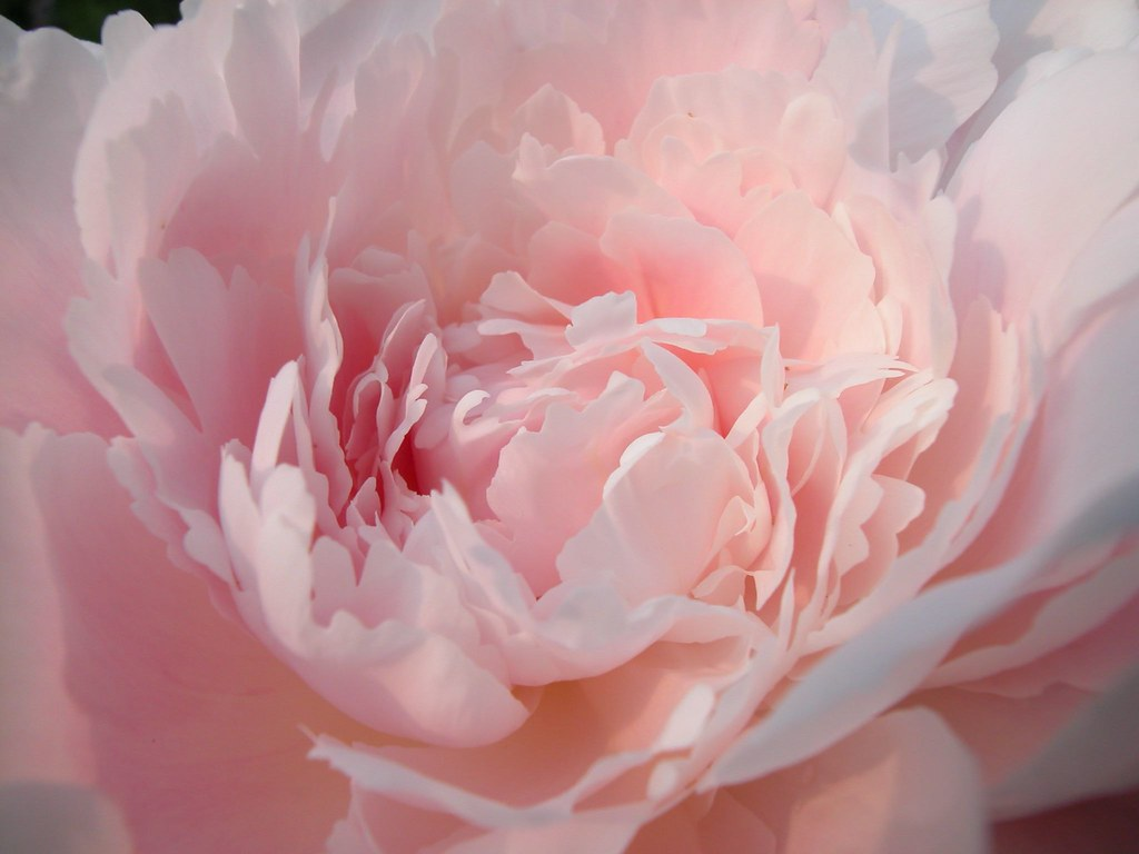 Image Result For Rosa Hd Color