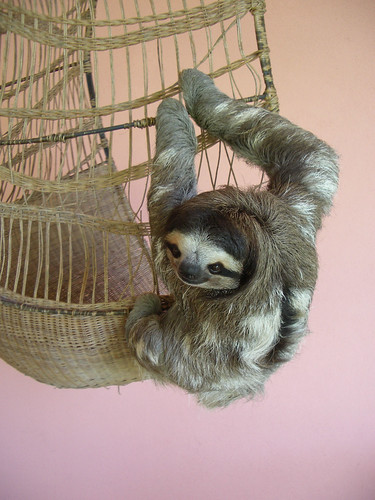 Buttercup the Sloth | by yaklulu