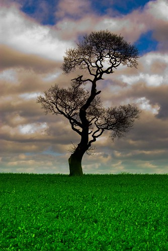 Lone Tree | by Dave Hanmer