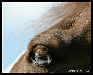 Linger on... Your pale blue eyes | by Rock and Racehorses