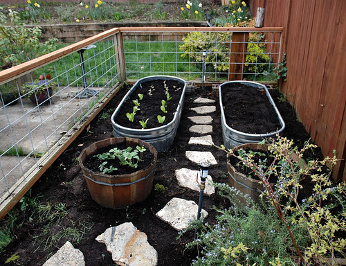 New vegetable garden | by Sundry