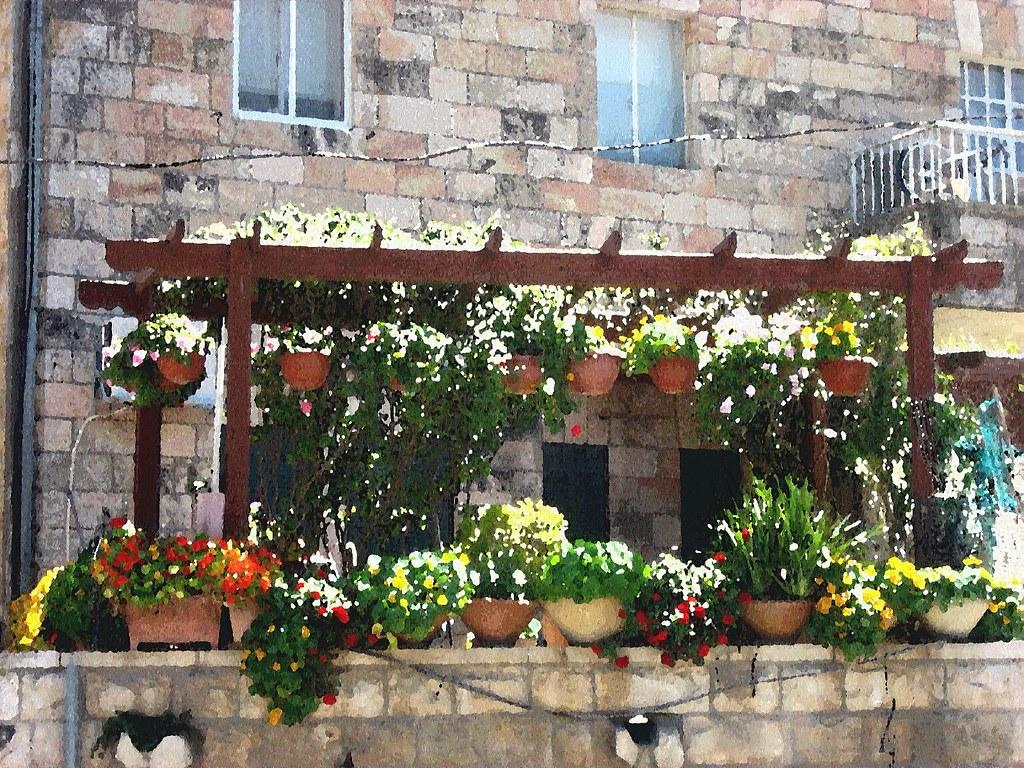 Balcony garden | A balcony garden blooms in the Jerusalem