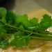 Homegrown Coriander