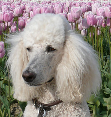 Untitled | by McKinley Poodle( Shay)