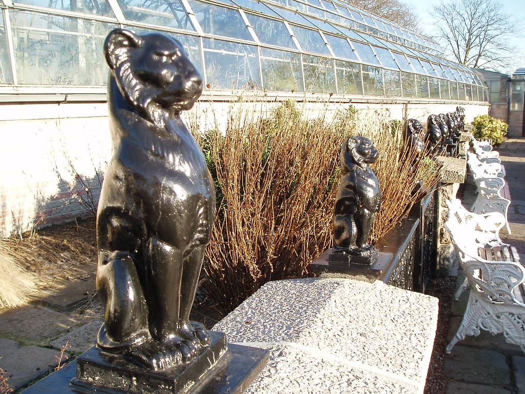 kelly u0027s cats winter gardens duthie park aberdeen flickr