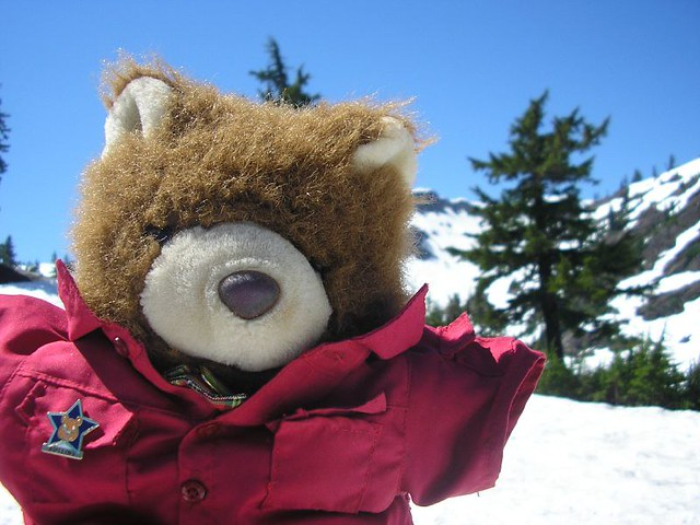 Barnaby Bear Travels To Mount Baker Heres Barnaby