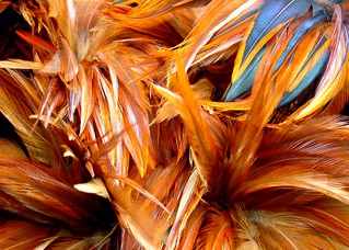Feathers | by elston