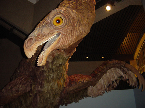 Feathered Dinosaurs 3 I Don T Recall The Name But