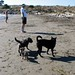 DJ and other dogs, Albany Bulb beach, July 2005