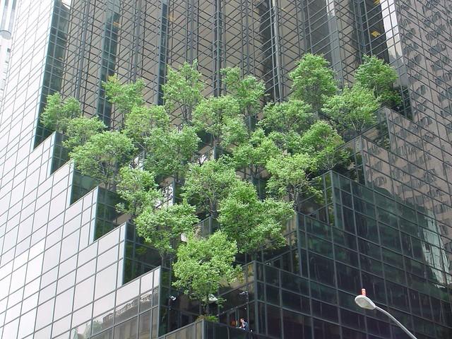 Dsc02897 roof terrace the new york way otzberg flickr for Terrace trees