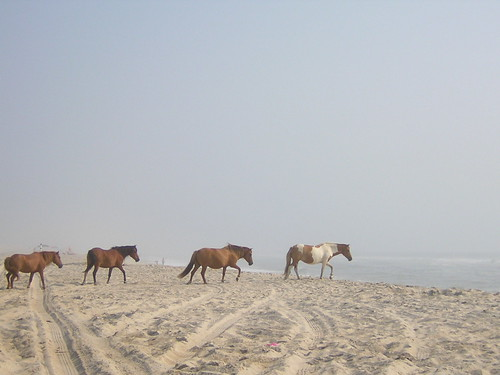 Assateague Horses 3 | by TheGoodReverend