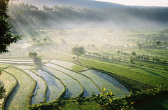 Balinese Rice Paddies at Sunrise | by andycarvin