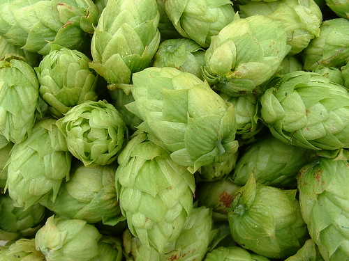 Hops close-up 3 (Cascade) | by sequoianorcal