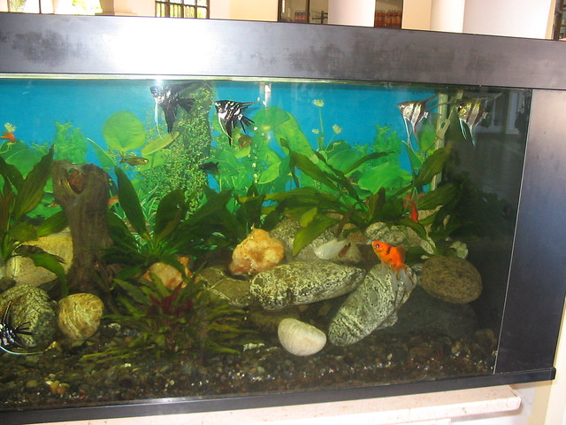 Fish tank in the villas lobby explore mutantlog 39 s photos for Fish tank camera
