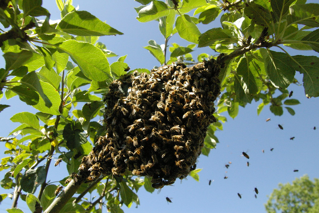 Image result for bee swarm
