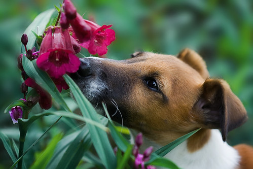 Take time to smell the flowers | by kelpie1