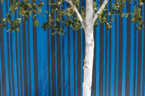 bluebirch | by sepiatone