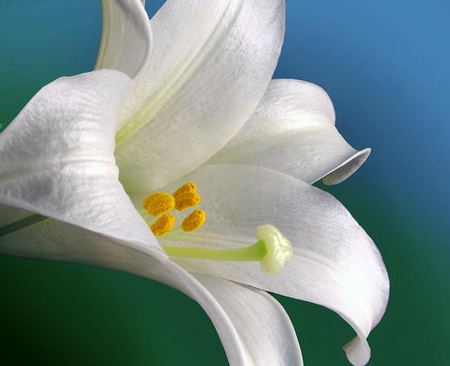 Image Result For Free Biblical Easter