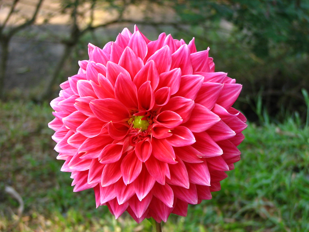 flowers of all kinds  surya kiran surya kiran  flickr, Beautiful flower