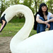 Not Leda, but deffo a swan