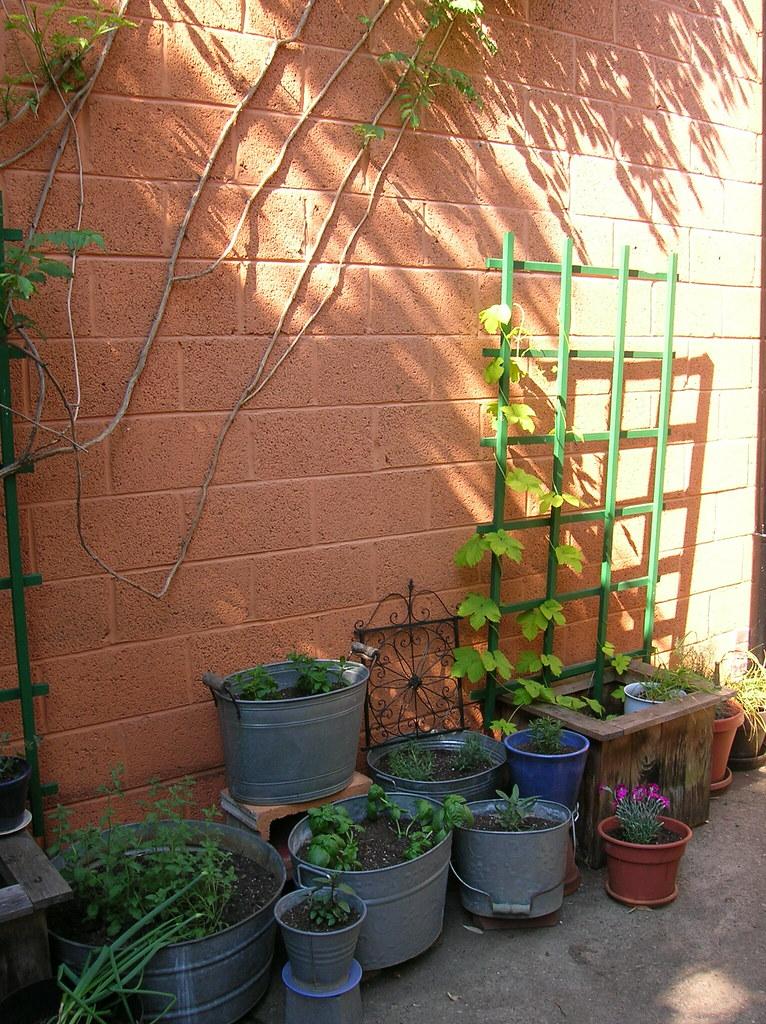 Dave 39 S Garden Herb Garden Hops I 39 Ve Made Some