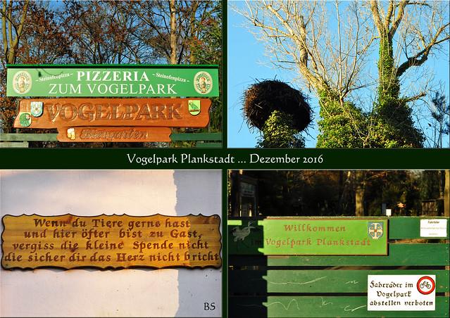 Plankstadt bei Heidelberg ... kleiner Vogelpark ... Habichtskauz ... Fotos: Brigitte Stolle, Dezember 2016