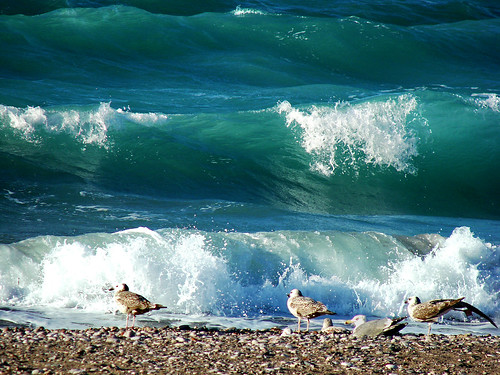 waves.... | by ester-**