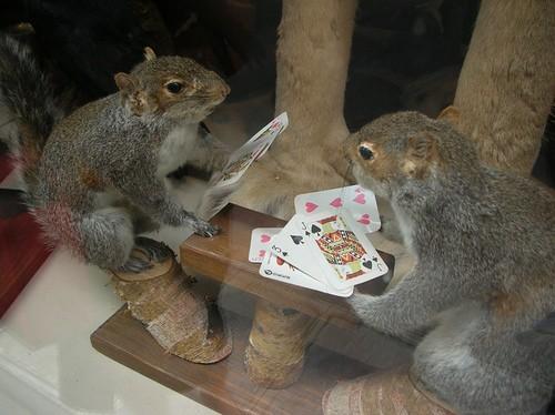 Squirrel poker