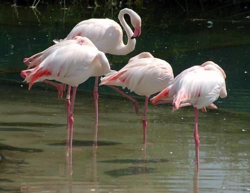 Pink Flamingos Eating Dog Poop