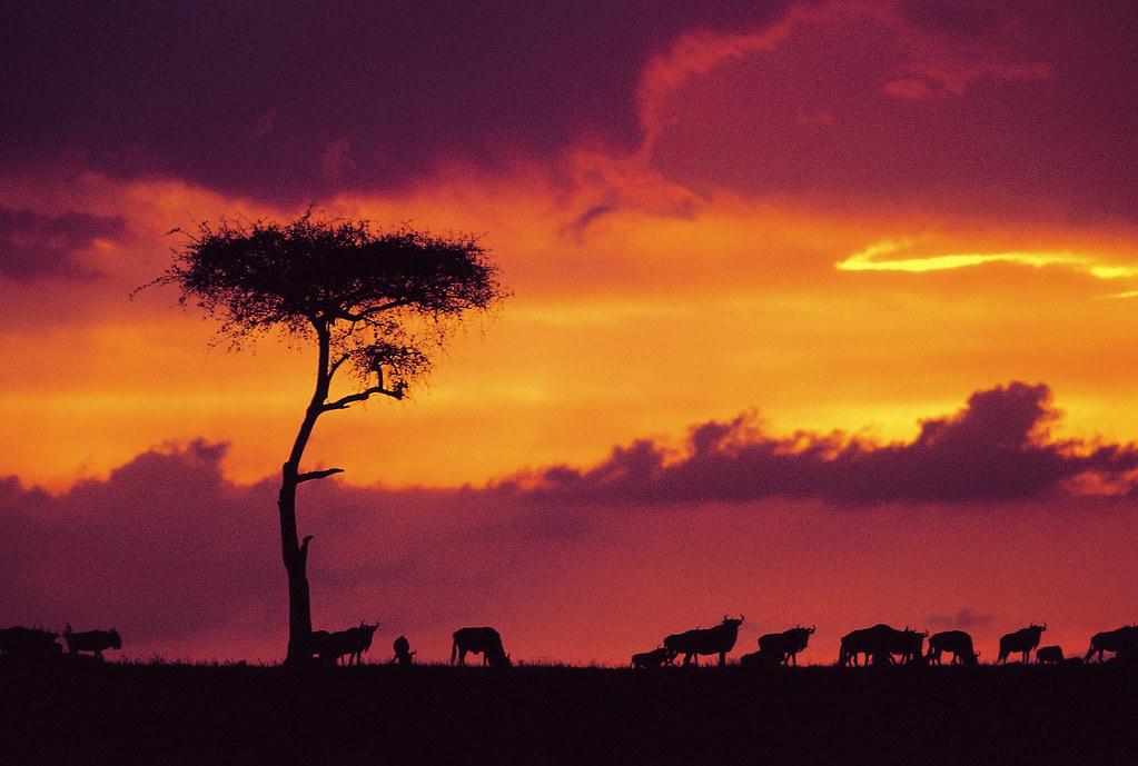 Resultado de imagem para imagem kenia