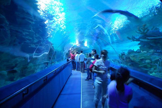Klcc Aquarium Tour