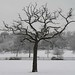 Tree in snow- Queens Mead Bromley