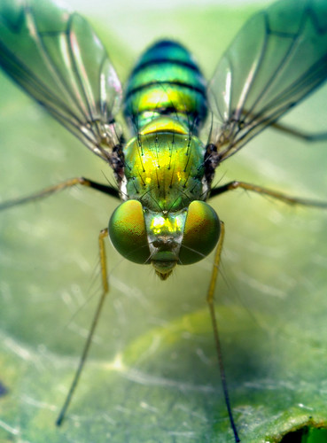 Green Fly | by Thomas Shahan