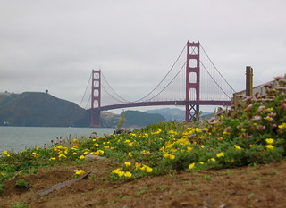 Golden Gate flowers | by shutterBRI