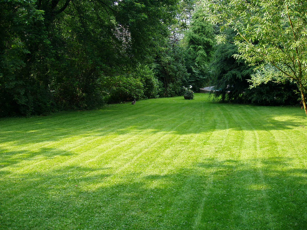 Image result for lawn maintenance