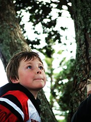 Boy climbs tree | by cheetah100
