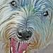 Terrier Terror (AFTER)