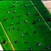 Eiffel grass