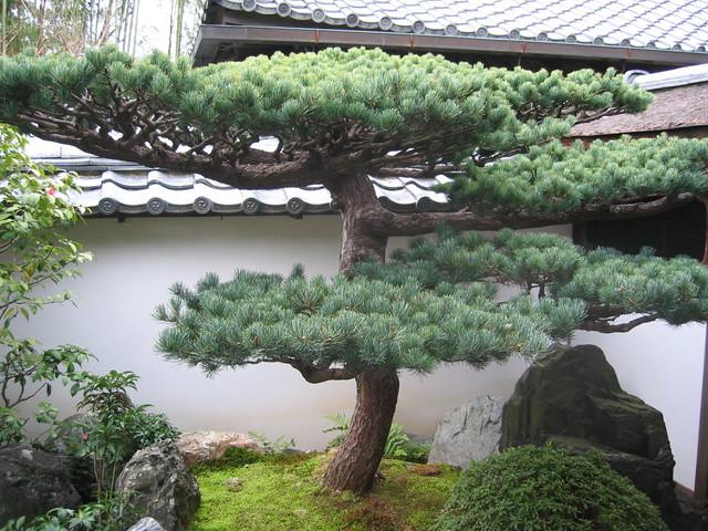 Japan kyoto daitoku ji zen buddhist temple daisen in zen r flickr - Grandi alberi da giardino ...