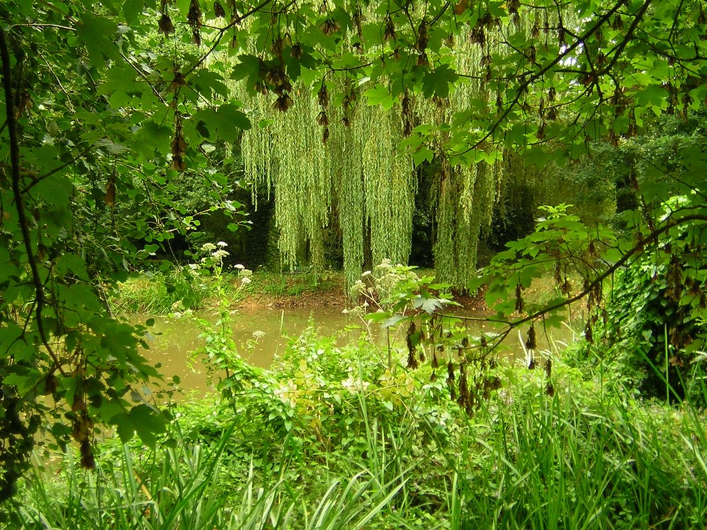 Rideaux De La Jungle Here One Can See How Much The Water H