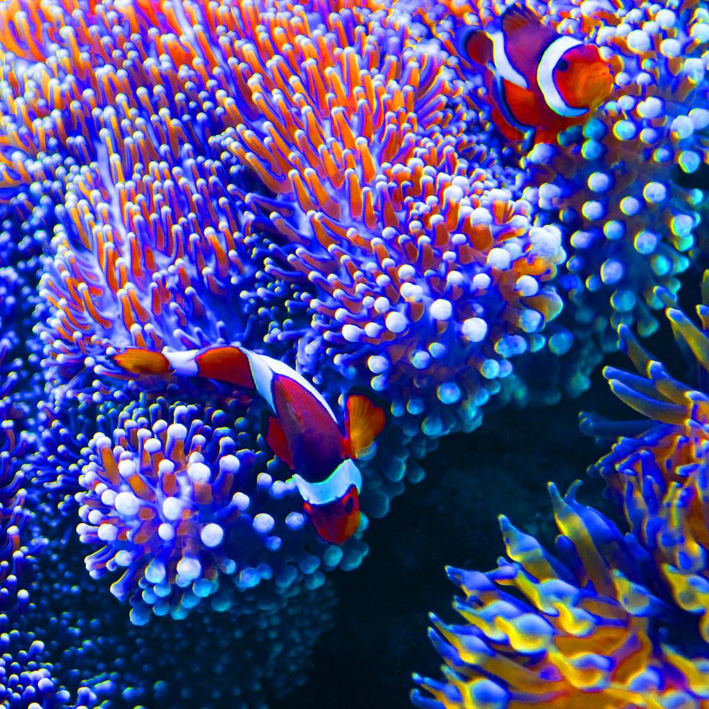 Hawaii #5 - Clown Fish And A Story
