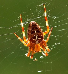 Spider and web | by algo