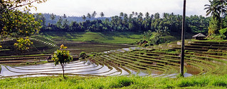 Rice Terraces Bali | by Atelier Teee