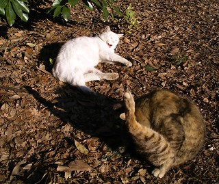 Park cats | by Blue Lotus