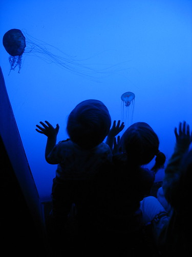Jellyfish at the Georgia Aquarium | by wardomatic