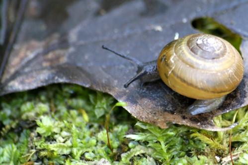 Snail, ID pls