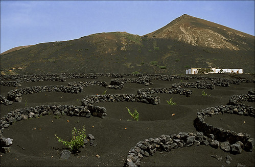volcanic vineyards | by Ron Layters